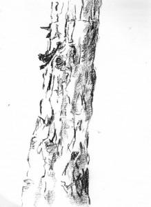 arbres10