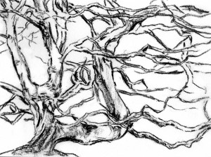 arbres4